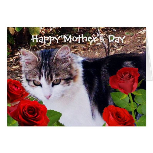 MOTHER'S DAY CAT WITH RED ROSES GREETING CARDS