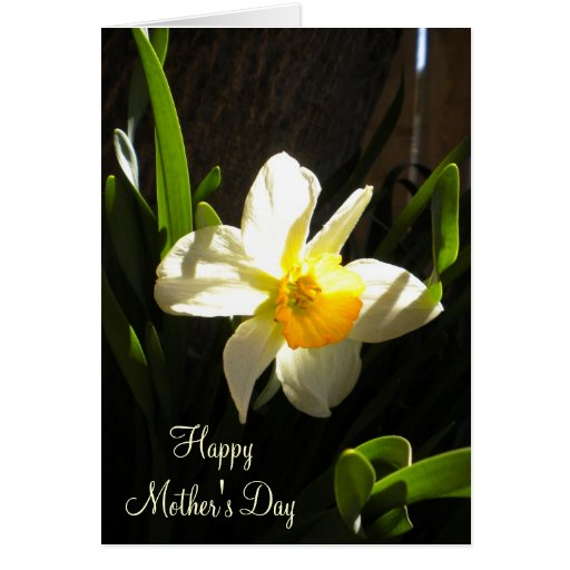 Mothers Day Daffodil Card