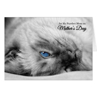 Mother's Day from the Cat - Siamese Greeting Card
