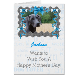 Mother's Day from the Dog in Light Blue and Gray Greeting Card