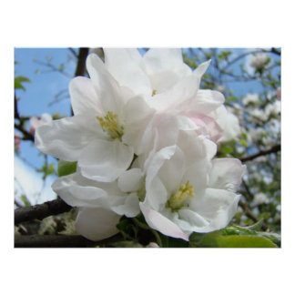 Mothers Day Gifts 48 APPLE BLOSSOMS Flowers Prints
