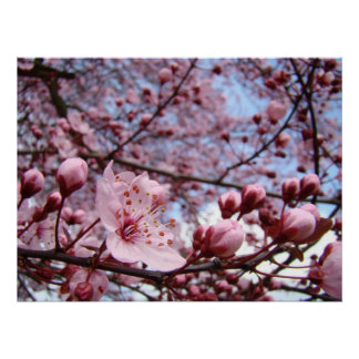 MOTHERS DAY GIFTS Spring Blossoms Art Prints