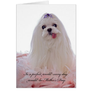 Mother's Day Maltese Dog Card