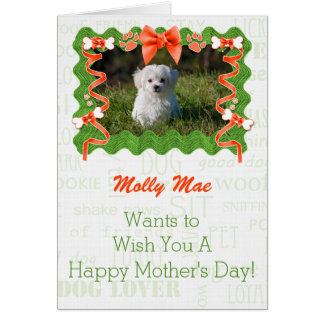 Mother's Day Orange and Green From the Dog Greeting Card