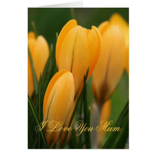 Mother's Day Orange Crocuses greetings card