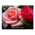 Mothers Day Pink and Red Rose Postcard