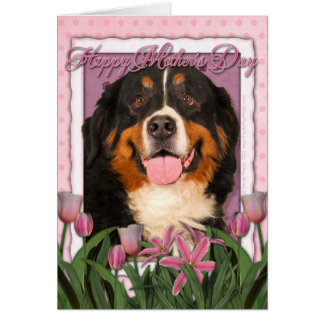Mothers Day - Pink Tulips - Bernese Mountain Dog Card