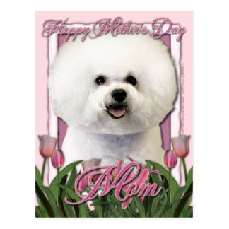 Mothers Day - Pink Tulips - Bichon Frise Postcard