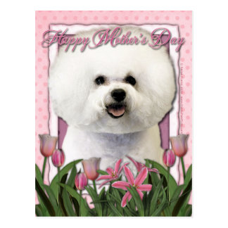 Mothers Day - Pink Tulips - Bichon Frise Postcards