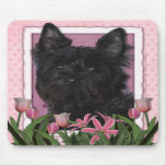 Mothers Day - Pink Tulips - Cairn Terrier - Rosco