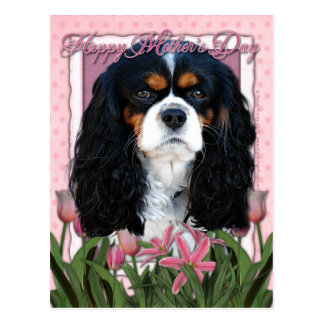 Mothers Day - Pink Tulips - Cavalier - Tri-Color Postcard