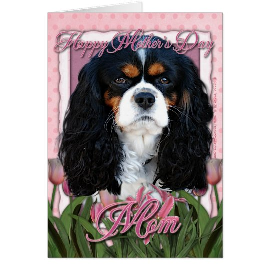 Mothers Day - Pink Tulips - Cavalier -