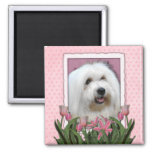 Mothers Day - Pink Tulips - Coton de Tulear