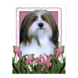 Mothers Day - Pink Tulips - Havanese