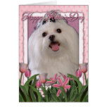 Mothers Day - Pink Tulips - Maltese