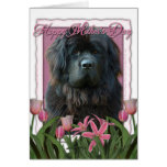 Mothers Day - Pink Tulips - Newfoundland Greeting Card