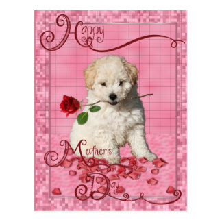 Mothers Day - Red Rose - Bichon Frise Postcard