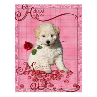 Mothers Day - Red Rose - Bichon Frise Puppy Postcard