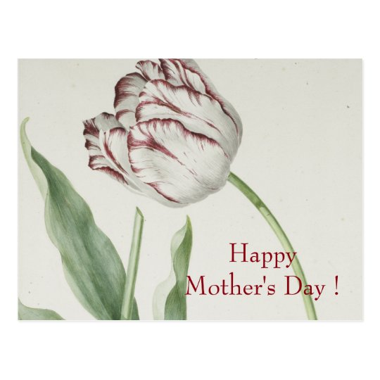 Mother's Day - Vintage white & red tulip