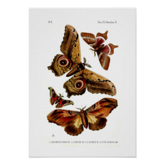 Moths Poster