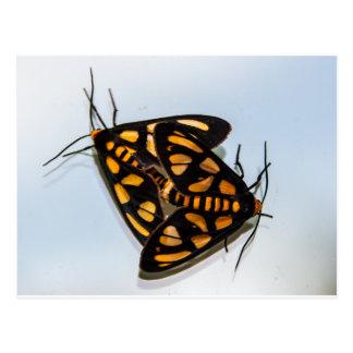 Moths - WOWCOCO Postcard