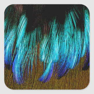 Motmot Feather Abstract Square Sticker