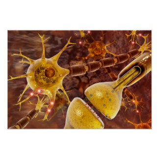 Motor Neurons Poster