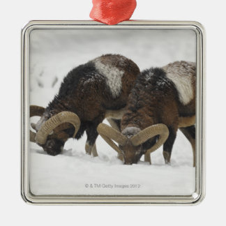 Mouflons in Winter, Germany Christmas Ornament