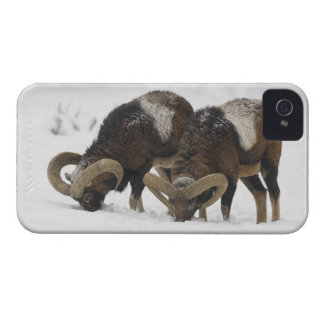 Mouflons in Winter, Germany iPhone 4 Case-Mate Case