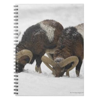 Mouflons in Winter, Germany Notebooks