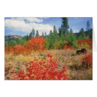 Mount Hood fall colors Note Card