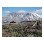 Mount St Helens Spring Landscape Photo Poster