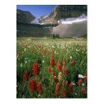 MOUNT TIMPANOGOS WILDERNESS, UT, US,
