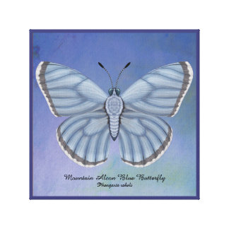 Mountain Alcon Blue Butterfly Canvas Print
