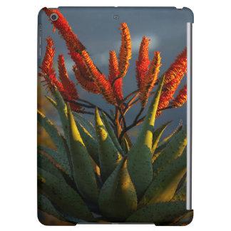 Mountain Aloe (Aloe Marlothii Berger)