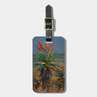 Mountain Aloe (Aloe Marlothii Berger) 2 Luggage Tag
