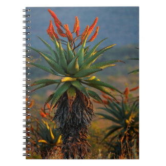 Mountain Aloe (Aloe Marlothii Berger) 2 Notebooks