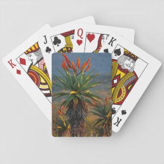 Mountain Aloe (Aloe Marlothii Berger) 2 Playing Cards