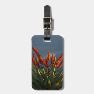 Mountain Aloe (Aloe Marlothii Berger) Luggage Tag