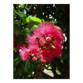 Mountain Apple Blossoms Poster