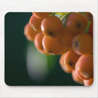 MOUNTAIN ASH BERRIES by Michelle Diehl Mouse Pad