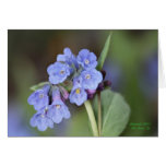 Mountain Bluebell Greeting Card #1