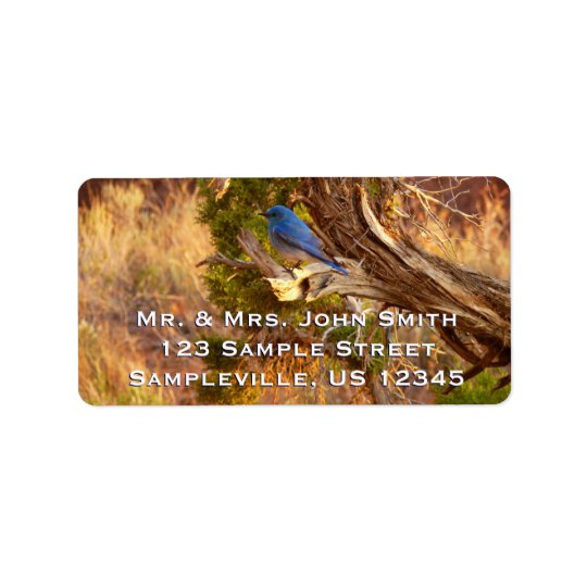 Mountain Bluebird at Arches National Park Label