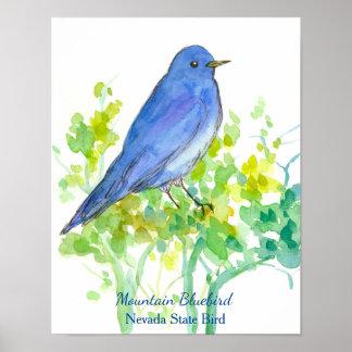 Mountain Bluebird Nevada State Bird Watercolor Poster