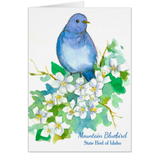 Mountain Bluebird State Bird of Idaho Blank Card