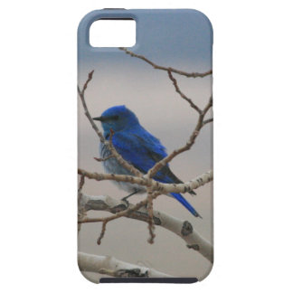 Mountain Bluebird Tough iPhone 5 Case