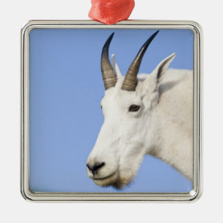 Mountain Goat Billy portrait at Logan Pass in Silver-Colored Square Decoration