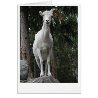 Mountain Goat Card