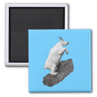 Mountain Goat Climbing Square Magnet