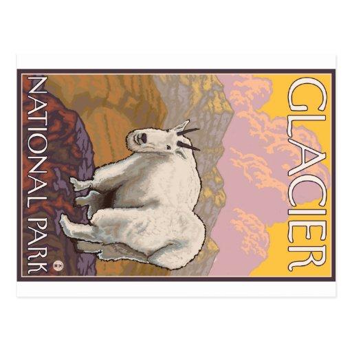 Mountain Goat - Glacier National Park, MT Postcard